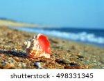 Rapa Whelk Shell On A Sea Beac...