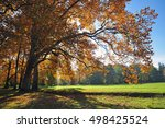 autumn big tree nature  fall...   Shutterstock . vector #498425524