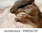 Wild Chipmunk Animal Face...