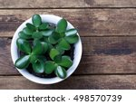 potted plant standing on a...   Shutterstock . vector #498570739