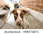dog shelter is is a beautiful... | Shutterstock . vector #498573871