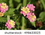 fall milkweed plant | Shutterstock . vector #498633025