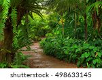 rainforest garden path  north... | Shutterstock . vector #498633145