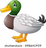 cute cartoon duck   | Shutterstock .eps vector #498641959