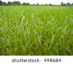 This is a low angle wide view of some green grass with the tree lined horizon in the background. - stock photo