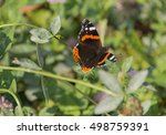 Small photo of butterfly Admiral (Vanessa atalanta) Nymphalidae brown with white, orange stripes, spots on the wings and antennae, sitting on a pink flower Shamrock (Fabaceae), Fabaceae (Faboideae), rear green lawn