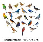 Stock photo big set of birds from thailand 498775375