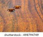 water wood on wood background ... | Shutterstock . vector #498794749