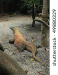 komodo dragon with a bright...   Shutterstock . vector #49880329