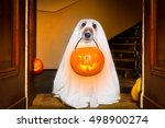 Stock photo dog sit as a ghost for halloween in front of the door at home entrance with pumpkin lantern or 498900274