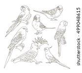 Different Parrots Set