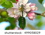 big dragonfly on a flower | Shutterstock . vector #499058029