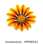 beautiful flower isolated on... | Shutterstock . vector #49908523