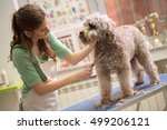 Stock photo pet grooming with scissors made hairstyle 499206121