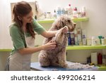 Stock photo groomer is cutting a dog hair in hair service 499206214