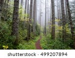 Pacific Northwest Forest Trail