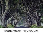 The Dark Hedges  North Ireland