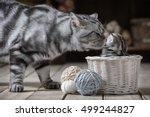 Stock photo caring for adult cats of a little kitten sitting in a basket with balls of yarn 499244827