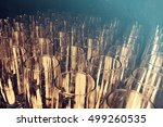 perspective of champagne flutes ... | Shutterstock . vector #499260535