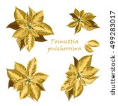 Set Of Poinsettia Flowers In...