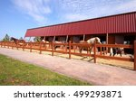 riding center | Shutterstock . vector #499293871