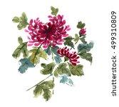 chrysanthemum flower  gorgeous... | Shutterstock . vector #499310809