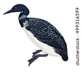 common loon bird detalised on...