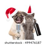 Cat And Dog In Christmas Hats...