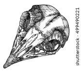bird's skull. hand drawing... | Shutterstock .eps vector #499490221