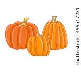 pumpkin. | Shutterstock . vector #499517281