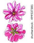 pink wild malva flower blossom. ...   Shutterstock . vector #499537381