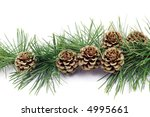 pine cones isolated on white   Shutterstock . vector #4995661