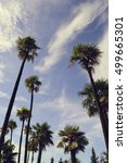 palm trees on the sky background | Shutterstock . vector #499665301