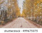 Road Through The Autumn Birch...