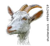 goat   a portrait   a color... | Shutterstock . vector #499694719