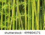 Full Frame Green Bamboo...