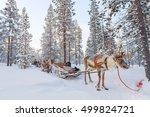 Reindeer Safari In A Winter...
