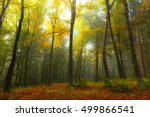 Stock photo fog in the autumn forest 499866541