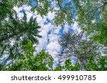 top of trees in dark forest | Shutterstock . vector #499910785