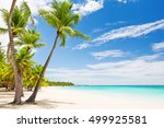 coconut palm trees on white... | Shutterstock . vector #499925581