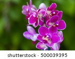 Beautiful Pink Orchid Flowers ...