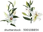 illustration with light lily... | Shutterstock .eps vector #500108854