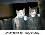 Two Little Cats Looking Behind...