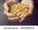 detail of an elderly woman's... | Shutterstock . vector #500308555
