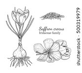 ink saffron herbal illustration.... | Shutterstock .eps vector #500319979
