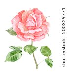 pink rose flower for your... | Shutterstock . vector #500329771