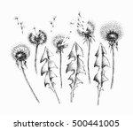 black isolated dandelion... | Shutterstock .eps vector #500441005