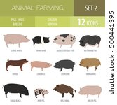 Pigs  Hogs Breed Icon Set. Fla...