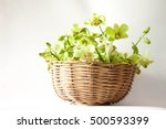 Green Orchids Placed In A Basket