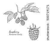 ink raspberry herbal...   Shutterstock .eps vector #500719171